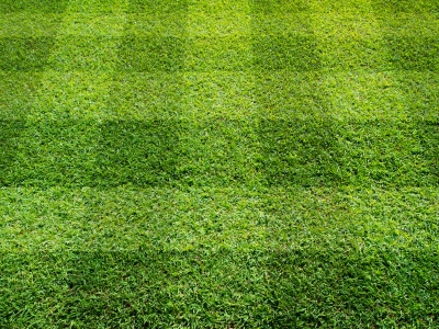 Once your new lawn has been established, meaning the grass has ...